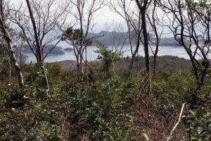 観察小屋付近ー大平山野鳥の森よりー