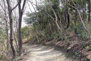 散策路ー観察小屋から東出口方面への道ー