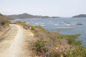 カキ筏ー大平山管理道路よりー