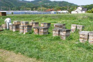 養蜂風景ー山田養蜂場ー