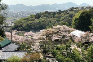 桜の季節ー仏心寺ー