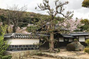 白壁と桜ー仏心寺ー