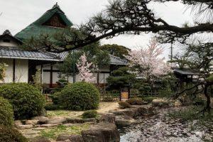 緑と桜ー仏心寺ー