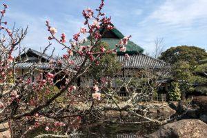 梅の季節ー仏心寺ー