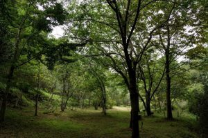 龍之口グリーンシャワーの森