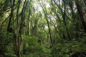 登山道ー龍之口グリーンシャワーの森ー