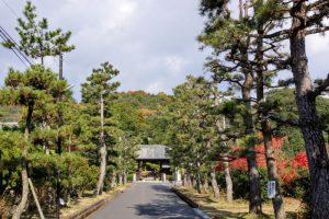 曹源寺の松並木