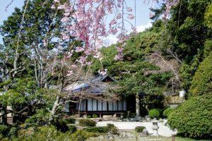 裏書院と枝垂れ桜ー曹源寺ー