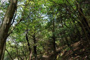 小鳥の森(初夏)ー三徳園ー