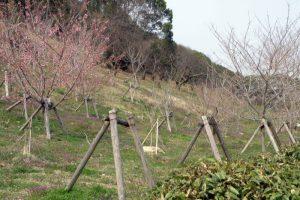 桜園ー三徳園ー