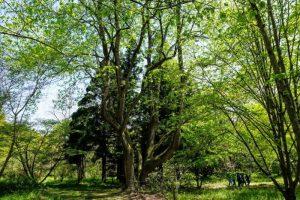 郷土樹木園ー三徳園ー