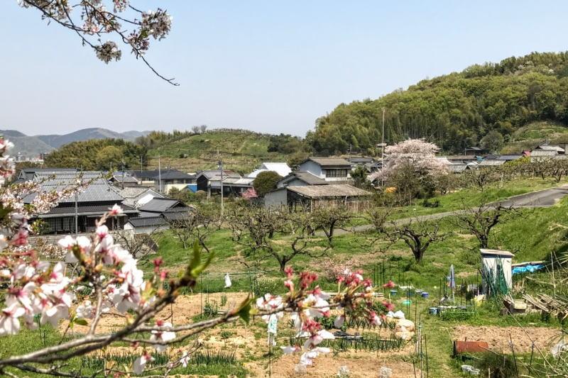 桜の沢田地区