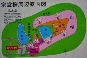 宗堂桜案内図