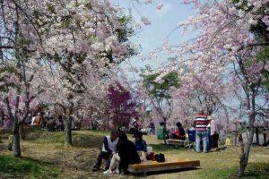 花見台ーたけべの森公園ー