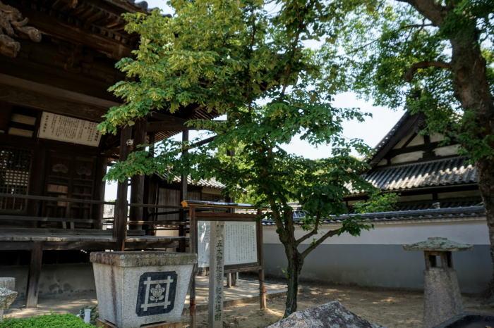 菩提樹ー啓運山盛隆寺境内ー