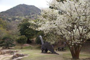 中央広場(春)ー岡山市民憩いの森ー
