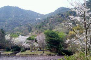 小名郷池(春)ー岡山市民憩いの森ー