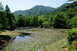 小名郷池(初夏)ー岡山市民憩いの森ー