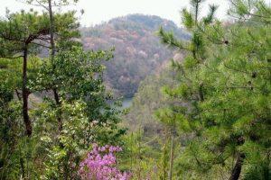 山桜とツツジーたけべの森公園ー