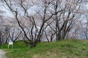 一本松古墳(春)ー岡山市半田山植物園ー