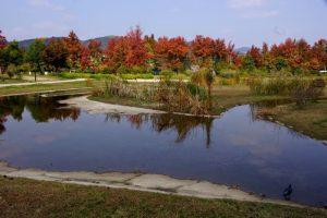 復元湿地跡ー津島遺跡ー