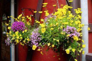 花の公園ー倉敷チボリ公園ー