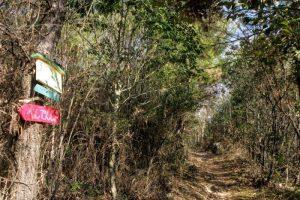 太然寺方面からの登山道