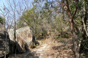 太然寺方面からの登山道ー矢坂山ー