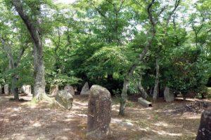木もれび広場ー川柳公園ー