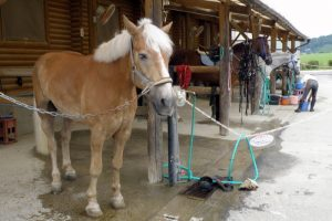 乗馬用の馬ーまきばの館ー