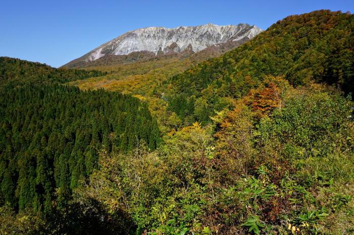 大山南壁とブナ林