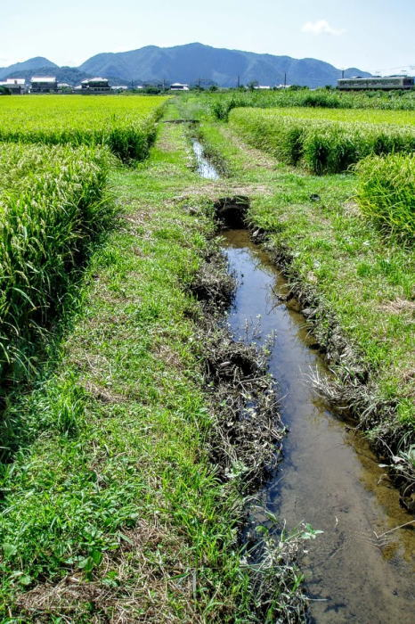 井田跡の水路