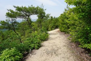 荒平山城跡南の散策路