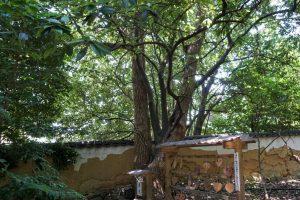 縁結びの木ー鶴崎神社境内ー
