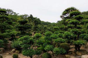日本庭園ー種松山公園ー