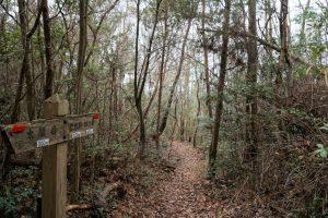 太閤岩への登山道