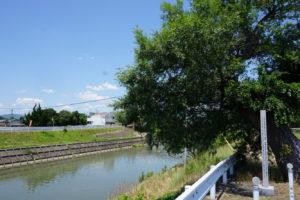 取水口趾から高松城水攻築堤趾方面