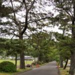 郷土記念物 吉備津の松並木