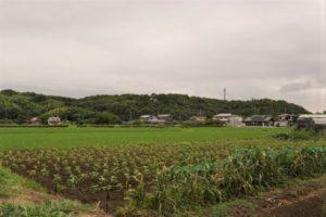 長良山城跡-2