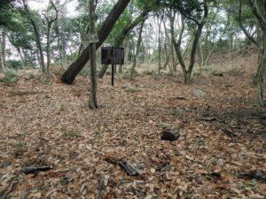 猿掛城本丸跡